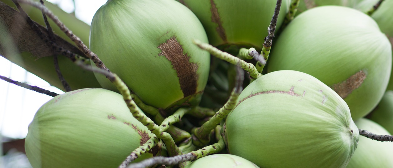 Home - Import Coconut